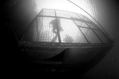 NorthWales-201810-VivianQuarry-13-TheCage (Tony J Gilbert) Tags: snowdonia llanberis northwales viviandivecentre vivianquarry mountsnowdon diving aquatic freshwater quarry floodedquarry nikon d300
