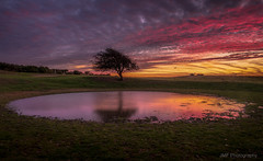 Standing alone (fieldino34) Tags: tree hill lake pond sunrise reflection longexposure nikon nikond750 nikonphotography southdowns southdownway colour cloud sky autumn dawn lonely beautiful patterns sussex nationalpark nationaltrust