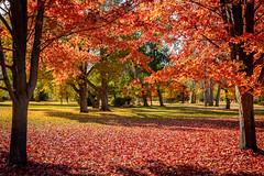48 hours earlier (Anvilcloud) Tags: autumncolour carletonplace riversidepark