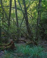 Bois de Chènes (jools_b) Tags: switzerland vaud boisdechènes ebony 45su kodak portra 400
