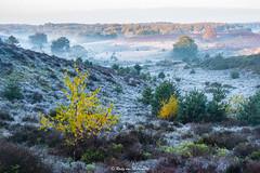 Sunrise over NP Veluwezoom (rudyvanmiltenburg) Tags: veluwe veluwezoom gelderland autumn fujifilmxt20 landscapes netherlands