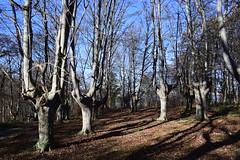 Bitaño (Izurtza) (eitb.eus) Tags: eitbcom 35411 g1 tiemponaturaleza tiempon2018 invierno bizkaia izurza javierlanazuñiga