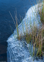 Ice and reeds (Donard850) Tags: glenstratfarrar reeds scotland autumn fall ice patterns