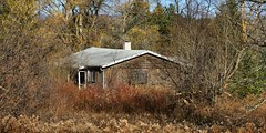 Abandoned 1950s country house, Caledon, Ontario (edk7) Tags: nikond300 nikonafsnikkor70200mm128giiedswmvredif edk7 2011 canada ontario peelregion caledon inglewood abandoned derelict shack cottage vacationhome weatheredwood architecture building oldstructure 1950s country countryside rural tree sky grass weed brush chimney porch barnboard siding