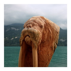 I Am the Walrus (ngbrx) Tags: brienz berneseoberland switzerland schweiz suisse svizzera bern berne bernese berner oberland brienzer brienzersee see lake walrus walross holzschnitzerei wood carving