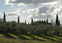 winter backlight (phacelias) Tags: cipressi cypresses cypressen olivetrees olijfbomen ulivi shadows ombre schaduwen clouds nuvole wolken backlight controluce tegenlicht umbria toscane italy