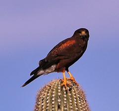 01-07-19-0043843 (Lake Worth) Tags: nature arizona tontonationalforest sonorandesert