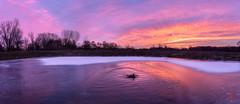 Monday Goose Sunrise (Mitymous) Tags: doorcreekpark fall2018 morning sunrise walk wisconsin