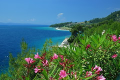 Egean coast (meren34) Tags: egean sea coast flower green blue beach turkiye mugla holiday summer sand