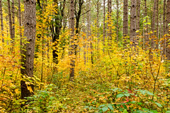 Many moods of autumn (Wicked Dark Photography) Tags: landscape wisconsin autumn fall foliage forest nature trees woods