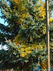 P9940713 (DrOpMaN®) Tags: autumn 30mm dmcgx7 lumix mzuiko30mmmacro olympus panasonic m43turkiye