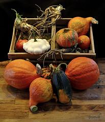 Retour du jardin (DOMVILL) Tags: butternut courge domvill légume naturemorte patisson wwwflickrcompeoplevildom couleurs orange bois parquet