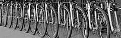 Rental Bikes (sswj) Tags: abstract abstrction abstractreality blackandwhitebw monochrome northbeach sanfrancisco availablelight existinglight bikes bicycle wheels spokes geometric geometry scottjohnson northerncalifornia streetphotography leicadlux4 composition composing fullscreenview repetitivepattern silvertones