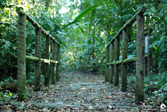 Passarela (Michell Fotografia) Tags: reserva céu ponte footbridge bridge natureza riodejaneiro nature brazil brasil florest floresta cidademaravilhosa clouds árvore passarela green cores