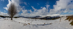 Lone Tree in a Winter Wonderland (sarahOphoto) Tags: loch garry loyne snow winter wonderland mountains thick blue sky lone tree covered road a87 scottish scotland highlands glen drive clouds nature landscape panorama travel tourist canon 6d uk united kingdom