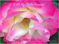 Happy Valentines to All My Flickr Friends ... (Irene, Montreal, QC) Tags: happyvalentinestoallflickrfriends flickrfriends valentine valentinesday valentinerose valentines happyvalentinesday roses pinkroses multicolouredroses multicolouredpetals flowers flowerpower beautifulnature blooms blossoms allflowers wonderfulnature awesomenature plants plantedflowers gardens gardenscenes gardenflowers 1001nights 1001nightsmagiccity 1001nightsmagicgarden