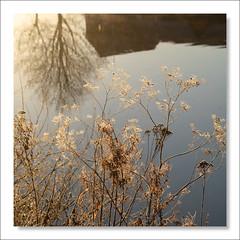Riverside Reverie (johnkaysleftleg) Tags: durham riverwear durhamcity morninglight backlighting backlit reflections squarecrop canon760d sigmaaf1770mmf2845dcmacro