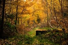 Enveloped in autumn 1 (odell_rd) Tags: autumn edlinghamcrags northumberland coth coth5 ngc npc