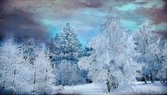 ~~~~   winter impressions  ~~~~ (jmb_germany) Tags:
