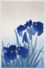 Iris flowers (1925 - 1936) by Ohara Koson (1877-1945). Original from The Rijksmuseum. Digitally enhanced by rawpixel. (Free Public Domain Illustrations by rawpixel) Tags: pdproject21batch2x otherkeywords tagcc0 antique art asian drawing flower illustration irises japan japanese koson museum name ohara oharakoson old paint rijksmuseum vintage