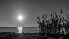 Sunset with Reeds (armandocapochiani) Tags: landscape litoranea salento sea seascapes beauty bianconero blackwhite bw