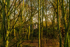 Speke Hall Estate (Phil Longfoot Photography) Tags: landscape landscapes forest forests nationaltrust countryside merseyside liverpool liverpoolphotography golden sunset