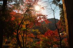 Autumn at Mt Takao (lorderikir) Tags: takao mountain autumn koyo japan tokyo