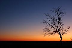 Lonely tree at twilight (Kaïyah) Tags: tree lonely plain desert crau provence landscape sunset dusk twilight nightscape sky color blue orange silhouette natureinfocusgroup