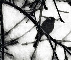 dream in a frozen world (CatnessGrace) Tags: winterwhites sybgroup spotlightyourbestgroup bird nature trees branches snow white black silhouettes monochrome bw blackandwhite