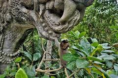 INDONESIEN, Bali , unterwegs in Ubud , im Affenwald , Banyanbäume, Affen und Skulpturen, 17931/11153 (roba66) Tags: bali urlaub reisen travel explore voyages rundreise visit tourism roba66 asien asia indonesien indonesia insel island île insulaire isla ubud affenwald padangtegal monkeyforest monkey affen javaneraffen makaken macaca wild macaque balinese longtailed tier tiere animal animals creature jardin giardini park nature natur naturalezza baum bäume tree trees arbes arboles alberi wald forest banyanbaum skulptur sculpture dämon baboon