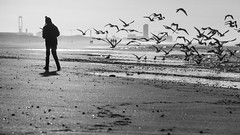 Andreas scares the seagulls on comand - B&W (Drummerdelight) Tags:
