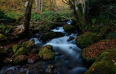 Stream Kitansawakei - Daisen (Kashinkoji) Tags: sony a77 stream slow exposure autumn nature daisen outdoor