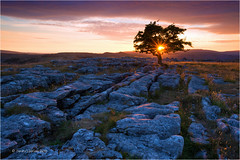 Winskill Stones (Sandra Lipproß) Tags: limestonepavement sunset star nature outdoor landscape yorkshire yorkshiredales malham uk england greatbritain tree rocks geology sky clouds winskillstones