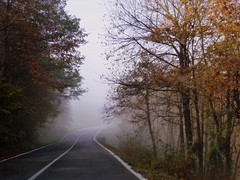 la curva di Rosai (fotomie2009) Tags: autunno 2016 dopo carcare liguria italy italia autumn street road strada savona fog mist misty nebbia trees alberi fall