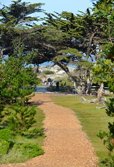 Path to the beach (afagen) Tags: california pacificgrove asilomarconferencegrounds montereypeninsula asilomar