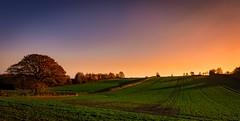 Green field (Phil-Gregory) Tags: mosborough mossvalley sheffield nikon d7200 tokina1120mmatx tokina 1120mmproatx11 1120mmproatx green field tree sunset orange scenicsnotjustlandscapes ngc england