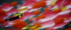 Colorful [Alt.] (xXSamirXx) Tags: abzu abzû giantsquid ue4 unrealengine4 reshade reshadeframework 505games
