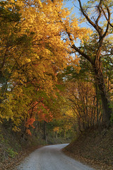 Roby Farm Road (Notley Hawkins) Tags: httpwwwnotleyhawkinscom notleyhawkinsphotography notley notleyhawkins 10thavenue fall leaves color woods columbiamissouri boonecountymissouri road windingroad tree forest gravelroad wood rural october 2018 robyfarmroad