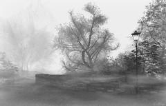2019 Valium Photo Contest (Loegan Magic) Tags: secondlife fog tree blackandwhite stones wall landscape