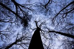 Dreams In Pieces (jah32) Tags: trees tree springwaterconservationarea alymer ontario canada christmaswalk lookingup nature sky light dark poetry poem dreams
