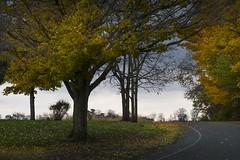 turning the corner to winter (charlesgyoung) Tags: autumn fall michigan charlesyoung nikon nikonphotography nikondx d500 landscape