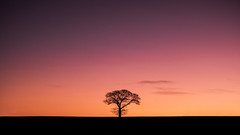 Lone Tree (ed027) Tags: ifttt 500px sunrise sunset sky clouds tree morning light beautiful lonely simple minimalist color colour silhouette local farmland africa lion contrast beauty landscapes negative space empty orange red telephoto lone surreal serene calm