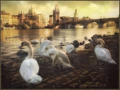 """from the series """"Walking around Prague."""" Autumn evening . (odinvadim) Tags: iphoneart edit landscape iphoneonly iphonex iphoneography church painterlymobileart autumn old iphone snapseed evening travel artist oldhouse textured editmaster river textures"""