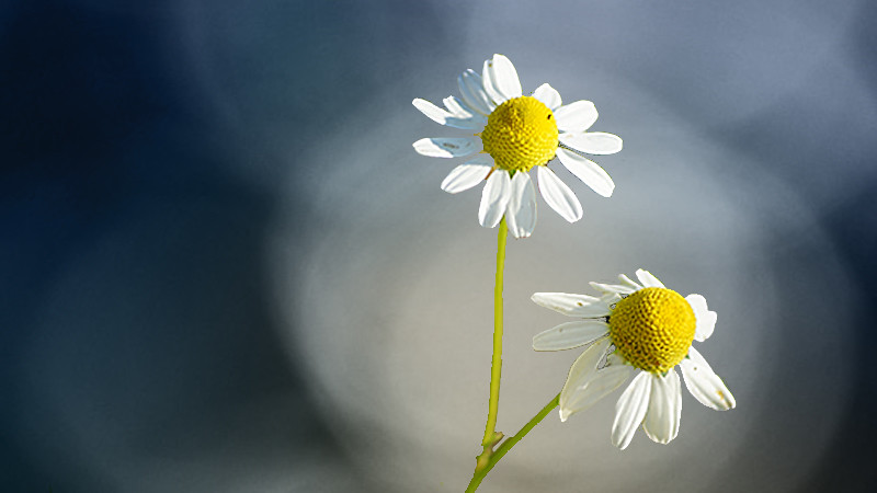 The World S Best Photos Of Fleurs And Marguerite Flickr Hive Mind