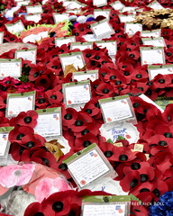 Thank you (© Freddie) Tags: london westminster sw1 cityofwestminster whitehall cenotaph wreath poppy remembrance fjroll ©freddie 19182018
