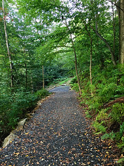 IMG_6411_eh (wyldanthem) Tags: allegheny national forest
