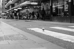 Runway (McLovin 2.0) Tags: street streetphotography pigeon bw monochrome urban city crossing melbourne australia sony a7r zeiss 55mm bokeh bird