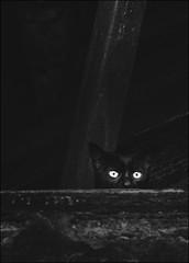 F_MG_4060-2-BW-1-Canon 6DII-Tamron 28-300mm-May Lee 廖藹淳 (May-margy) Tags: maymargy bw 黑白 貓 眼睛 廢墟 窗戶 正方形 街拍 線條造型與光影 天馬行空鏡頭的異想世界 心象意象與影像 台灣攝影師 幾何構圖 點貓 基隆市 台灣 中華民國 fmg40602bw1 cats eyes ruin humaningeometry humanelement streetviewphotography linesformandlightandshadow mylensandmyimagination naturalcoincidencethrumylens animal keelungcity taiwan repofchina canon6dii tamron28300mm maylee廖藹淳