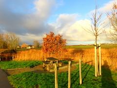 Veere (Omroep Zeeland) Tags: bewolking zon veere