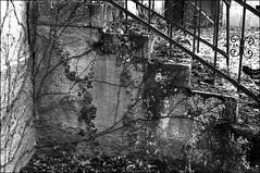 La nature reprend ses droits… (JJ_REY) Tags: maison abandoned abandonnée house escalier staircase végétation vegetation lierre ivy bw nb film rollei superpan200 leicam3 summicron50mm munster alsace france